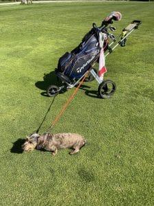 Golfwagen mit Hund